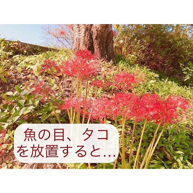 You are currently viewing 魚の目・タコの悪影響