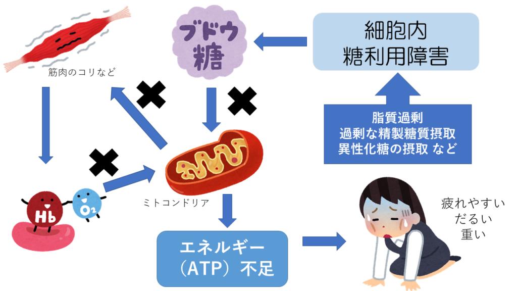 細胞内糖代謝異常による慢性疲労の説明