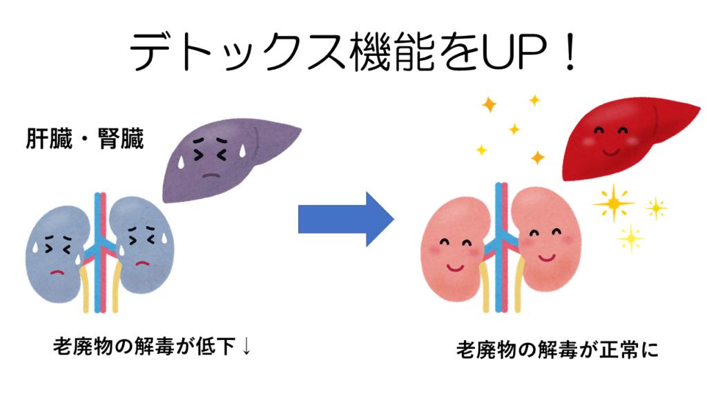 腎臓・肝臓の機能を整える